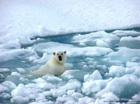 bear-on-ice.jpg